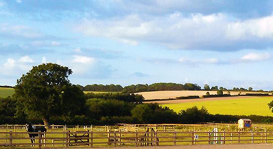 Willow Tree Farm.