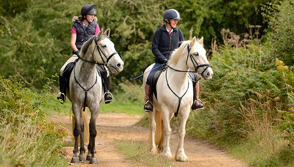 Horse Holidays at Willow Tree Farm.